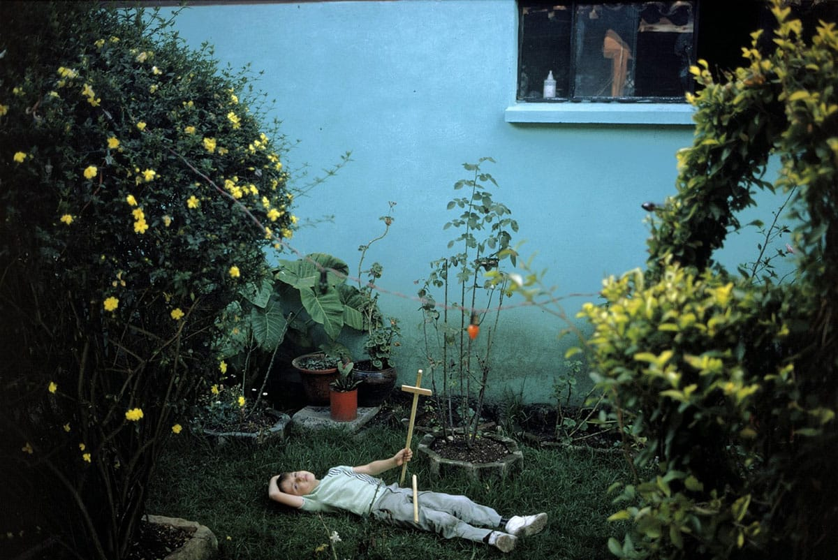Joel Meyerowitz - Wild Flowers